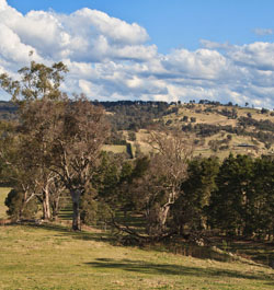 Megalong Valley © dicktay2000