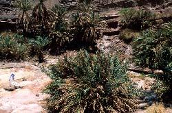 Sinai, Oasis près de Serabit el-Khadim