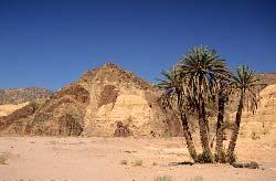 Egypte, Sinaï, palmiers et roches polychromes