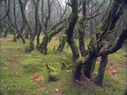 Parc national Garajonay, Isla de la Gomera, Canarias