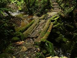 Biotopo del Quetzal Mario Dary Rivera, Guatemala © Axel