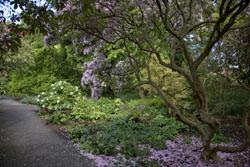 BOTANIC GARDENS - DUBLIN, IRELAND © infomatique