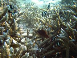 Diving Maldives, 2009 © Christian Jensen