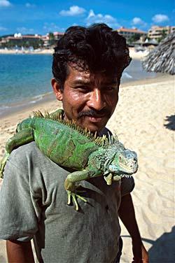 Iguane, plage de Huatulco - Oaxaca, Mexique  © Carlos Sanchez