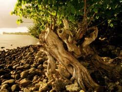 Polinesia (www.viajar24h.com)-1 © www.viajar24h.com