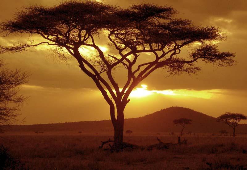 Coucher de soleil sur un acacia © NeilsPhotography
