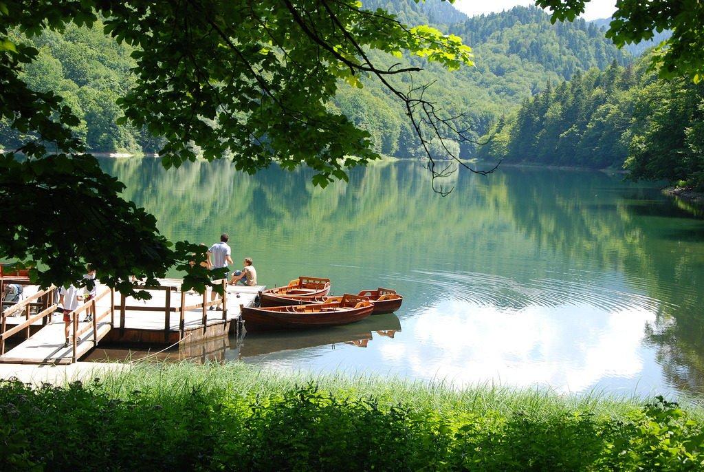 forêt de Biogradska Gora