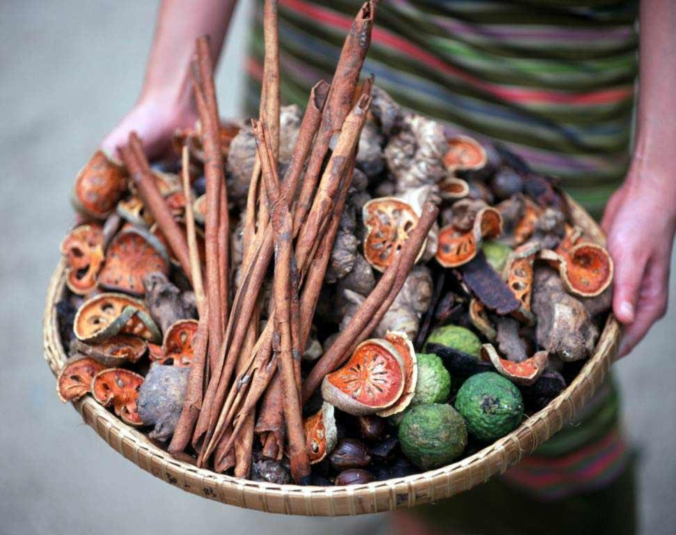 Plantes médicinales ayurvediques - Sri Lanka