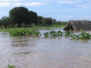 Pantanal - Brésil