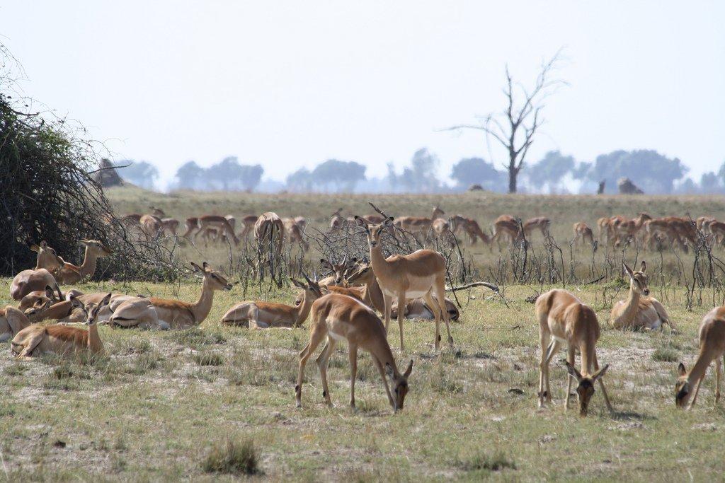 Présentation du Botswana