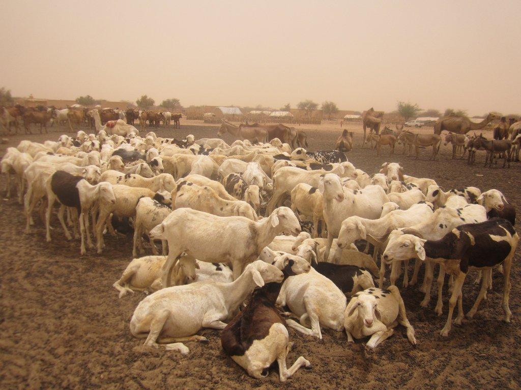 Comment partir en Mauritanie ?
