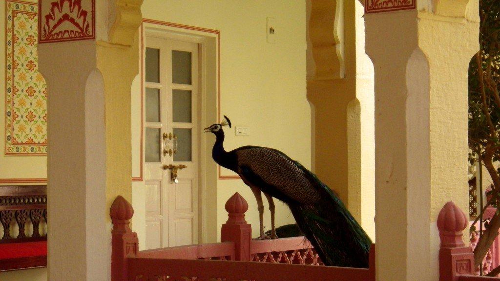 Hotel à Rohet - Inde, par Dominique Bouzianne