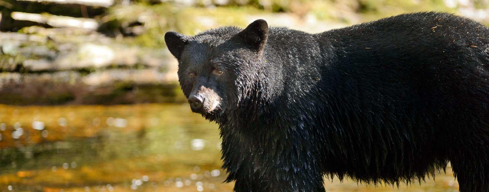 Découvrez la nature au Canada dans les centres de réadaptation de la faune