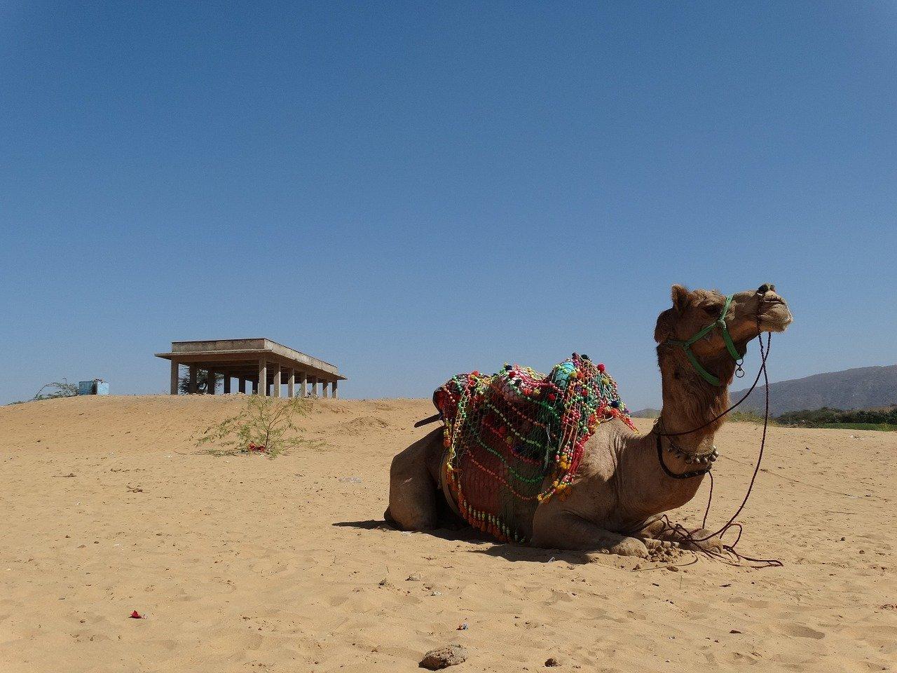 La fête des chameaux à Pushkar