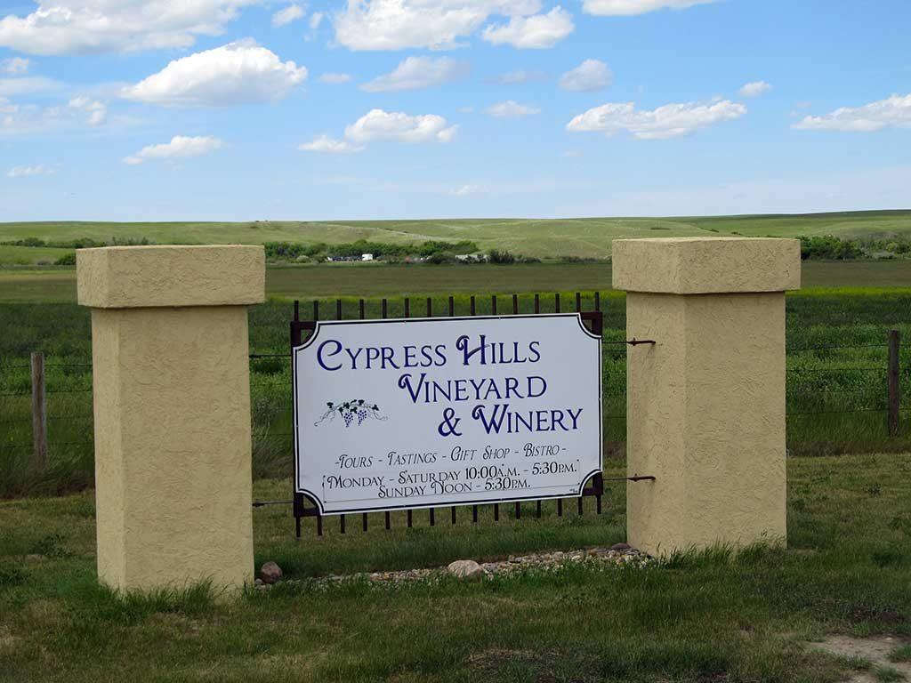 Vignes Cypress Hills - Saskatchewan, Canada