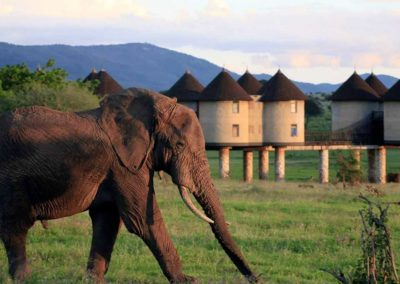 Eléphant, parc de Tsvo, Kenya
