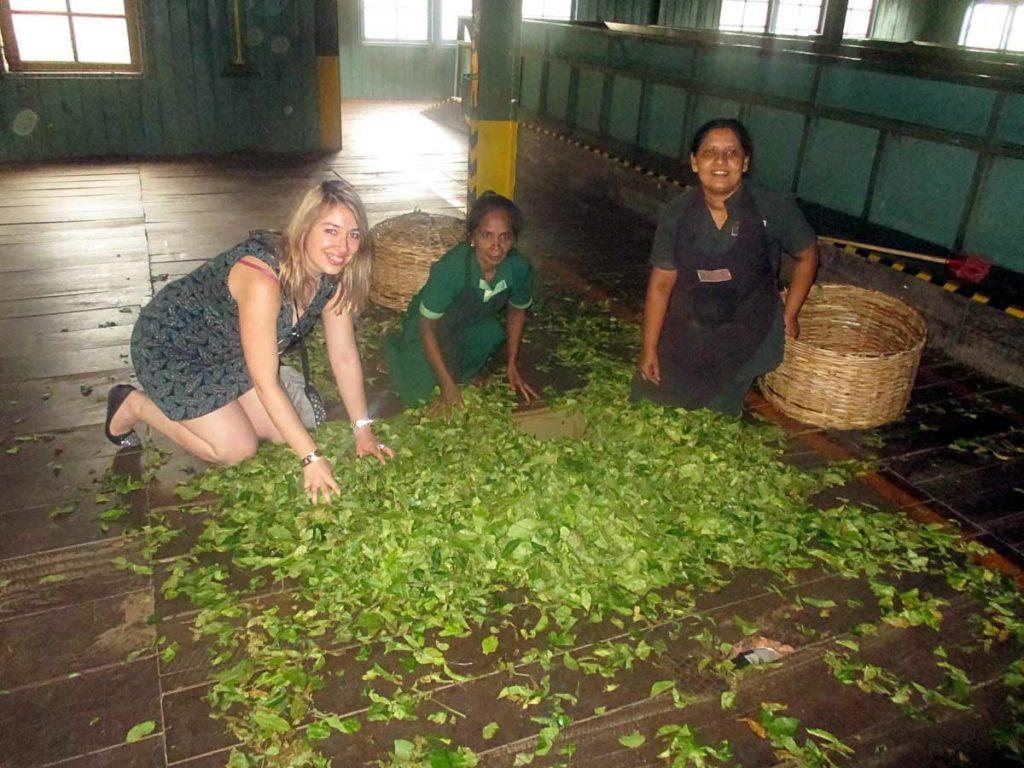 Fabrique de thé de Ceylan - Sri Lanka