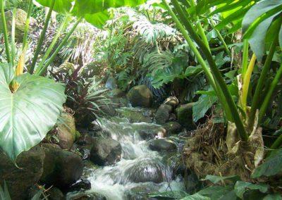 Forêt de Deshaies, Guadeloupe