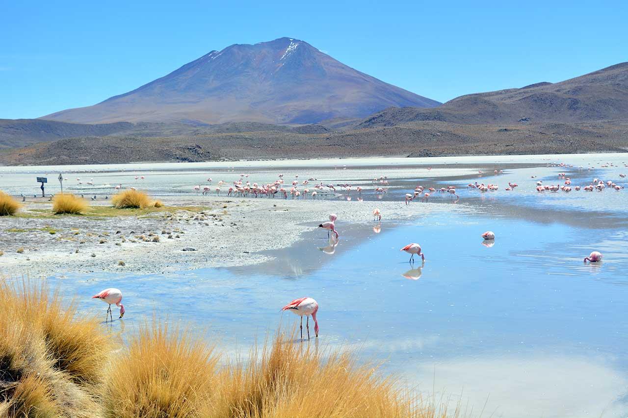 Lagune au Sud Lipez, Bolivie