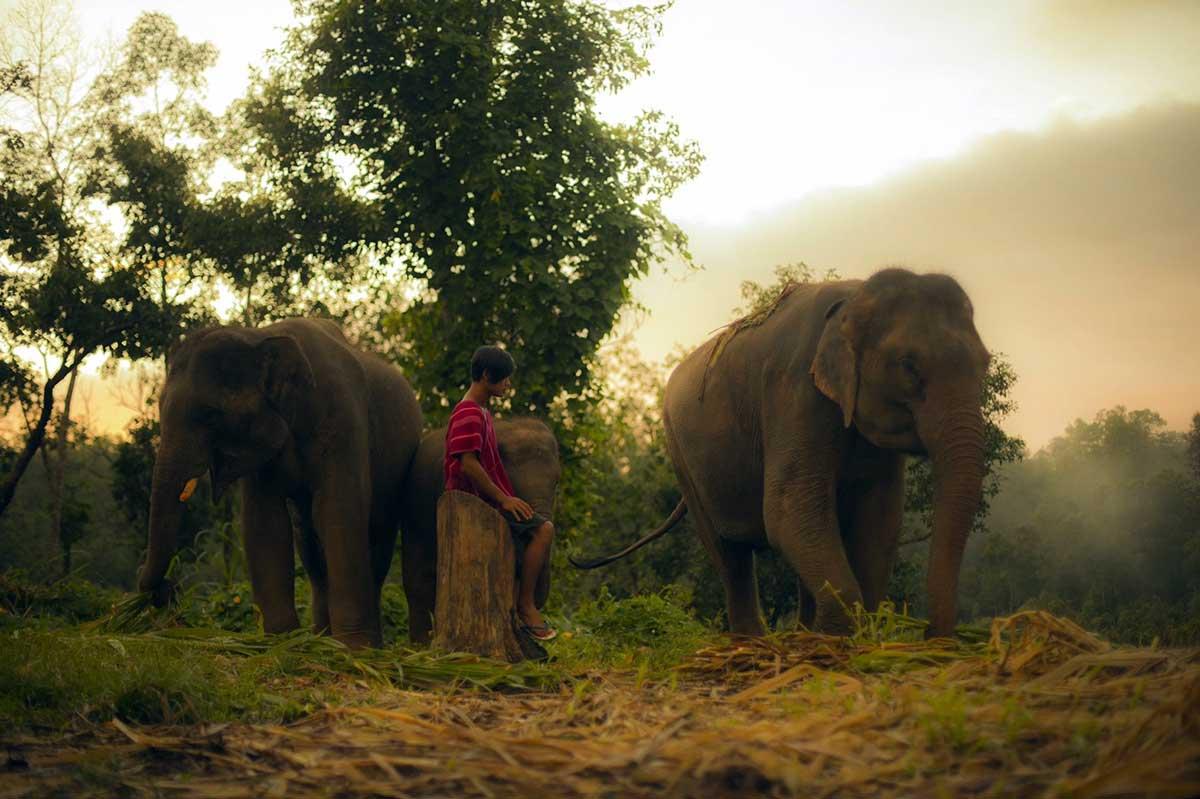 Une journée avec MON éléphant en Thailande