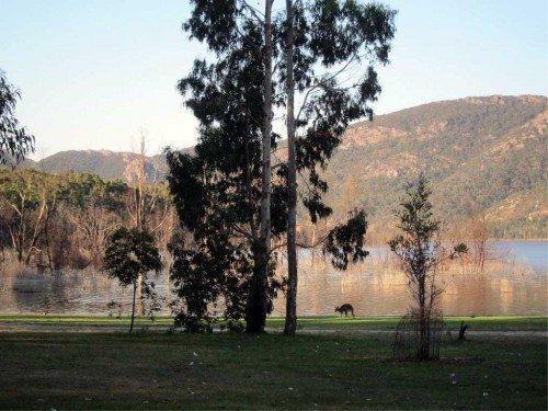 Kangourou, Parc des Grampians, Australie