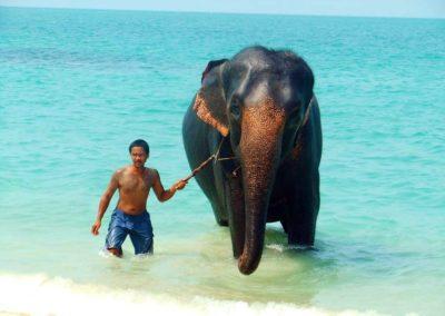 Eléphant sur la plage de Mae Nam - Koh Samui, Thaïlande