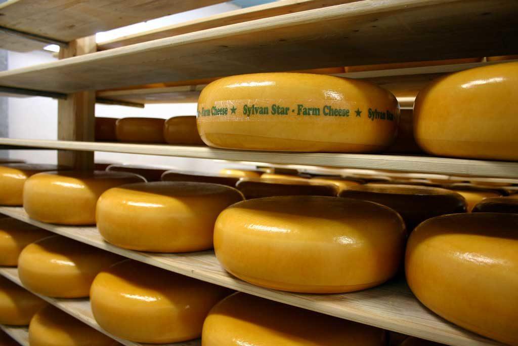 Sylvan Star Cheese, Alberta, Canada