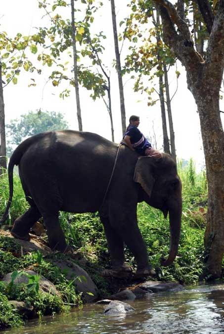 Patara Elephant Farm - Thailande