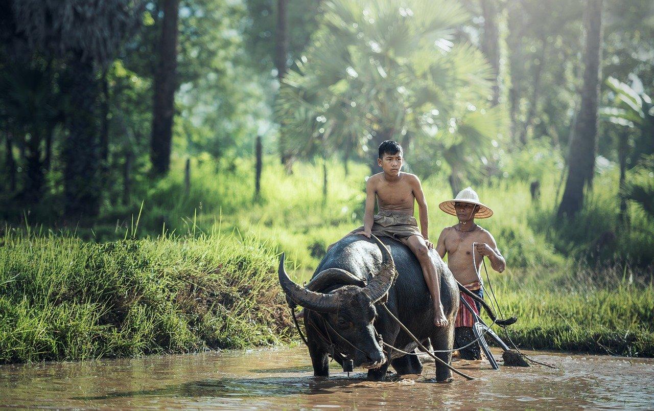 A la découverte du Nord de la Thaïlande !
